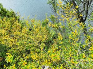 クレイドルマウンテンダブ湖周遊ハイキング