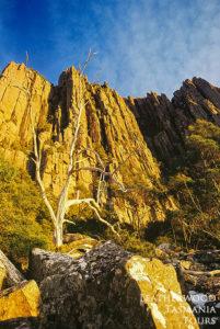 ウェリントン山オルガンパイプ