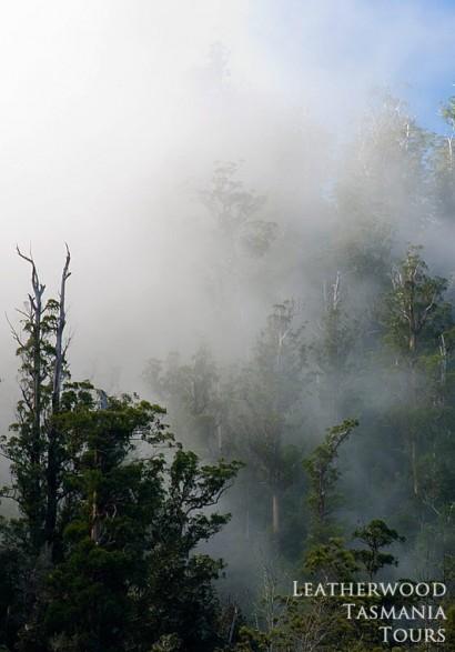 スティックス渓谷 タスマニア世界自然遺産