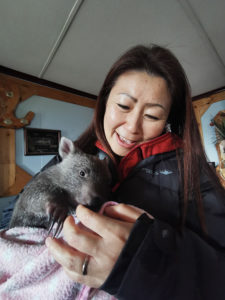 Wombat Rescue Tasmania ウォンバットの保護活動タスマニア